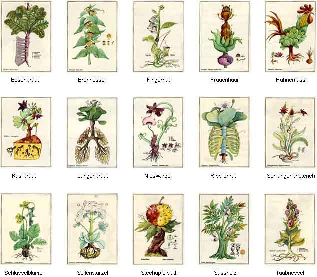 Herbarium Blätter das herbarium curiosum